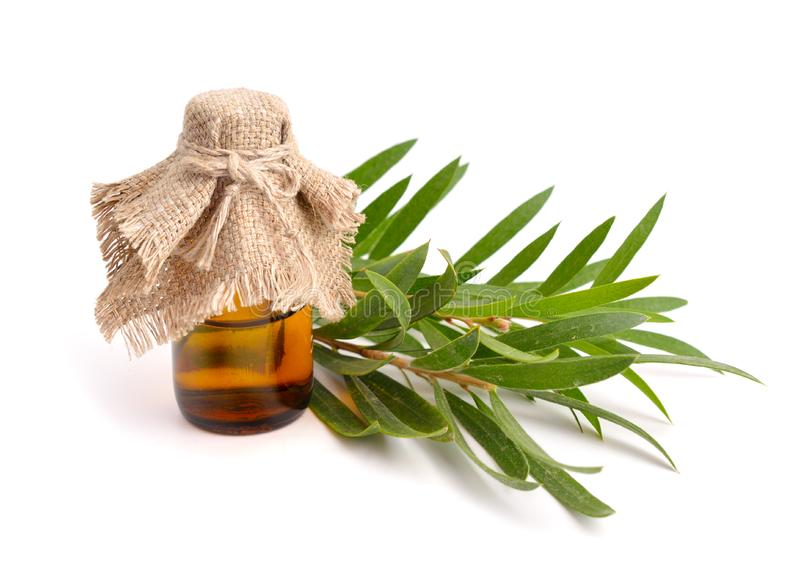 Melaleuca essential oil in the pharmaceutical bottle with twigs. Isolated on white background stock photography