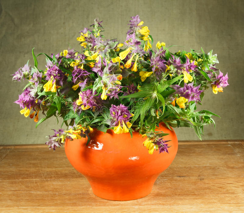 Melampyrum nemorosum. Still life. Bouquet of meadow flowers royalty free stock photos