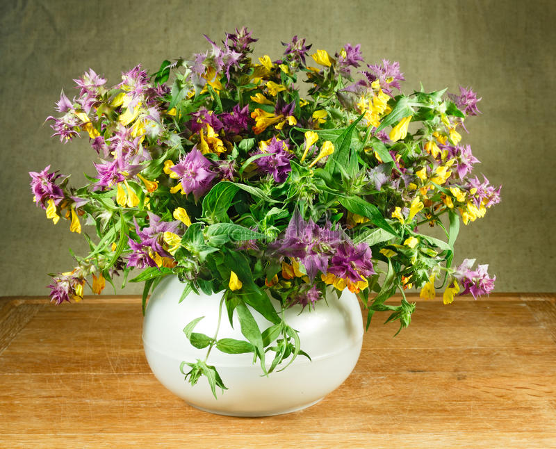 Melampyrum nemorosum. Still life. Bouquet of meadow flowers stock photos