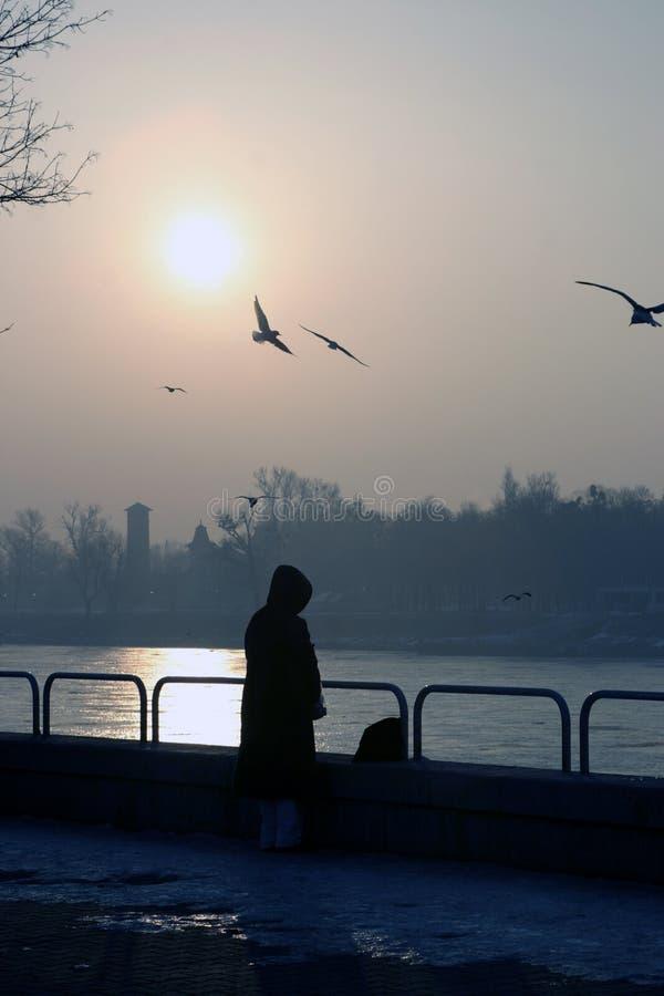 Melancholie Door Donau Stock Foto