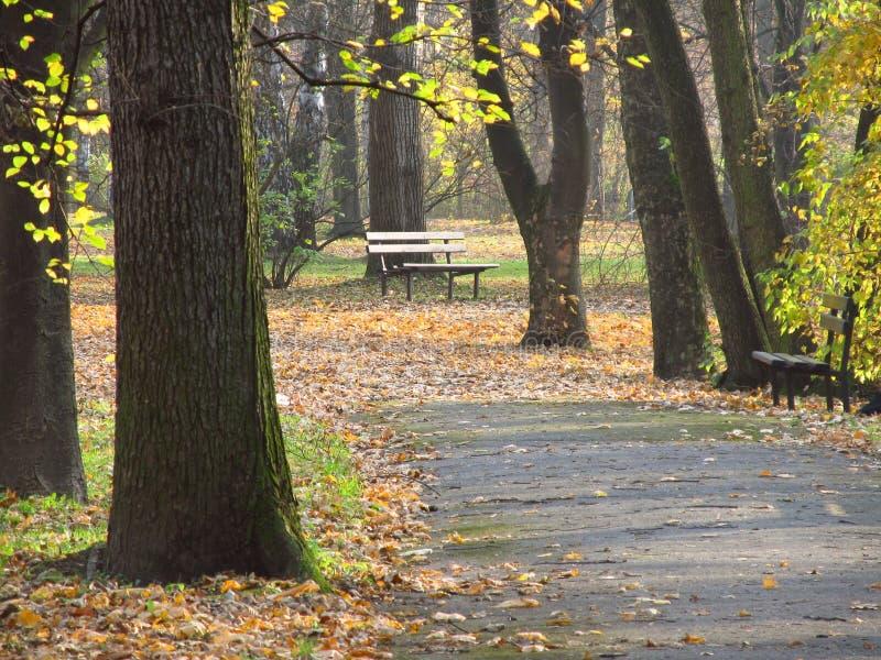 Melancholie in het park stock foto