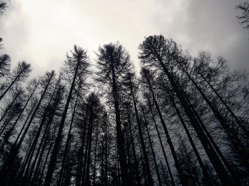 Melancholy, cold, extinct forest stock images
