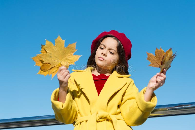 Melancholy concept. Ideas for autumn leisure. Kid hold maple leaves. Small girl wear fall outfit outdoors. Autumn bucket stock photography