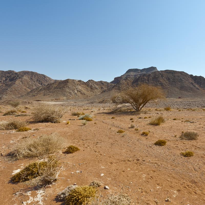 Melancholy and emptiness of the desert in Israel. stock photography