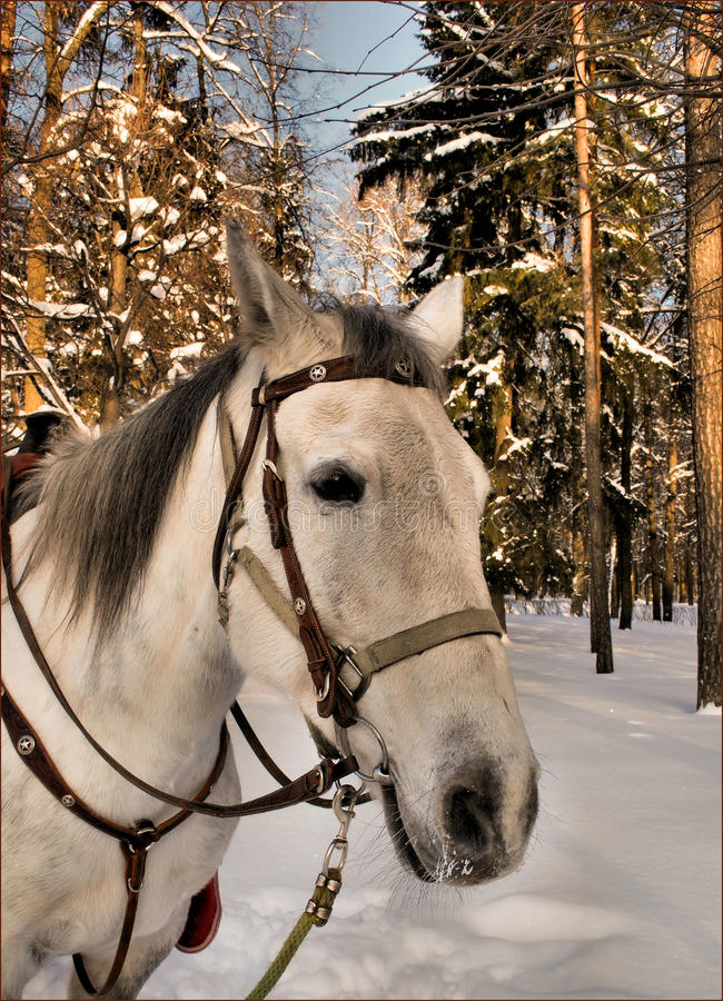 Download Melancholy horse stock photo. Image of snow, horse, trees - 26872968