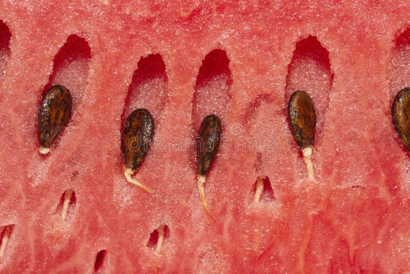 Melancia fresca com sementes, close up às sementes fotografia de stock royalty free
