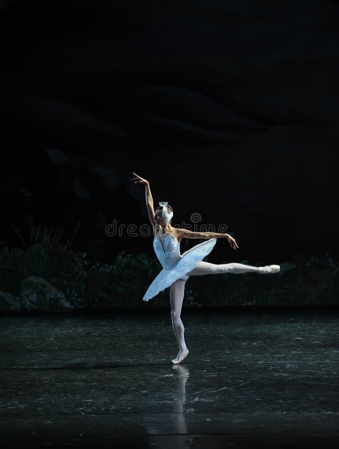 A melancolia atrasa-se no Beira do lago-bailado O Lago das Cisnes da cisne da beira do lago- fotos de stock royalty free