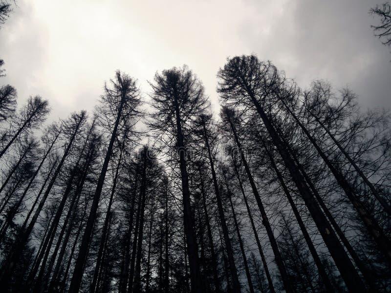 Melankolisk, kall slocknad skog arkivbilder