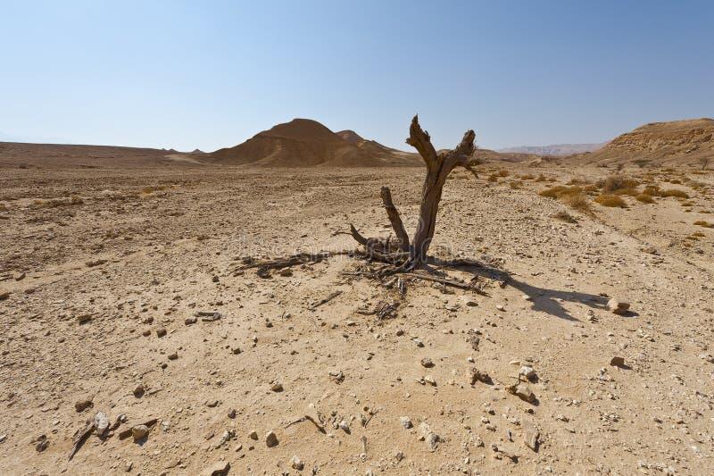 Melankoliskt och tomhet av öknen i Israel royaltyfri fotografi