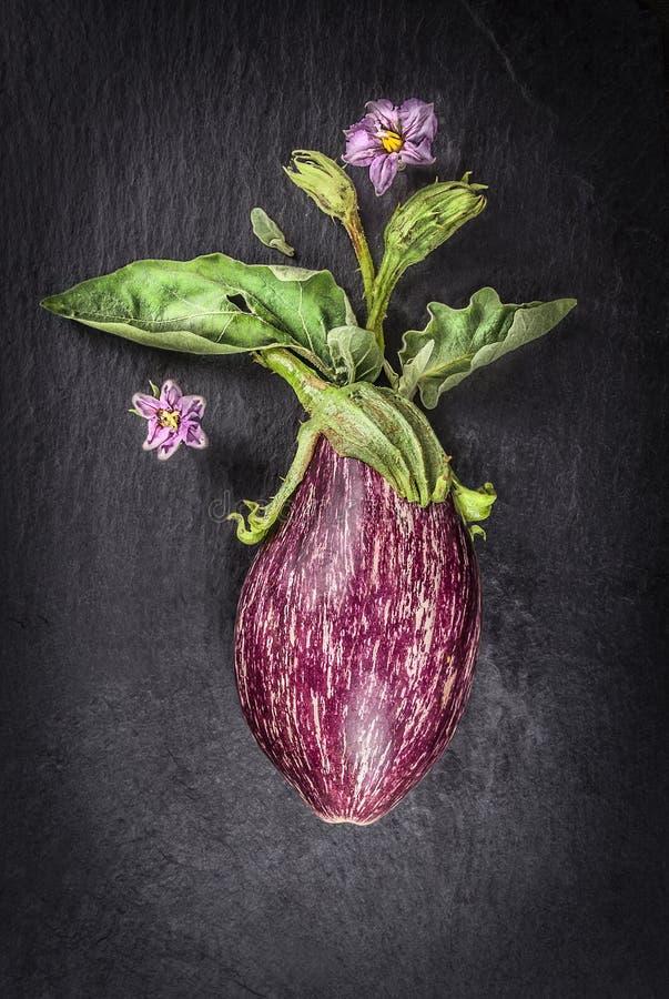 melanzana, foglie e fiori a strisce, verdure t immagine stock libera da diritti