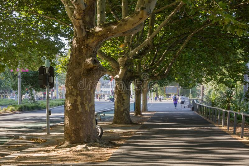 MELBOURNE, AUSTRALIA - street with big trees in Melbourne royalty free stock images