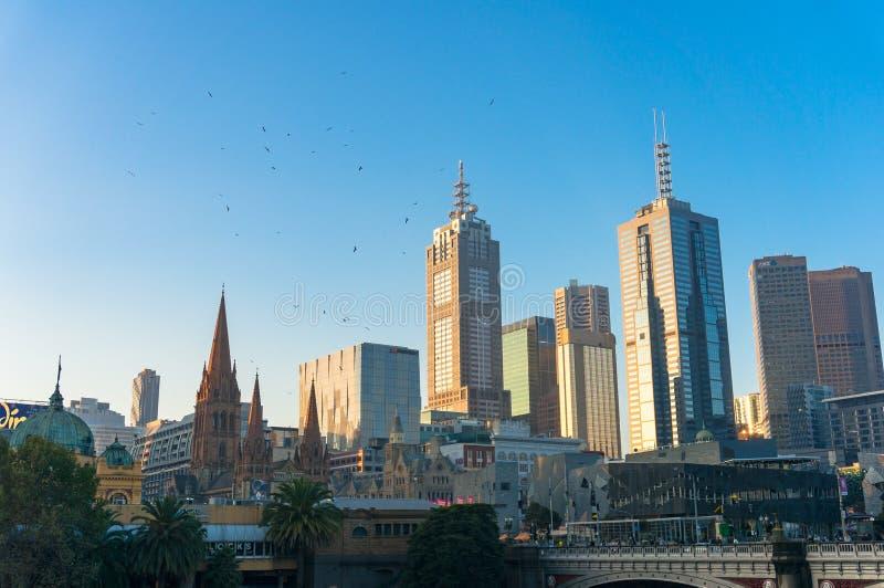 Melbourne pejzaż miejski z ptakami nad drapacze chmur obraz stock