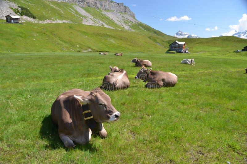 Melchsee-Frutt. Suiza imagenes de archivo