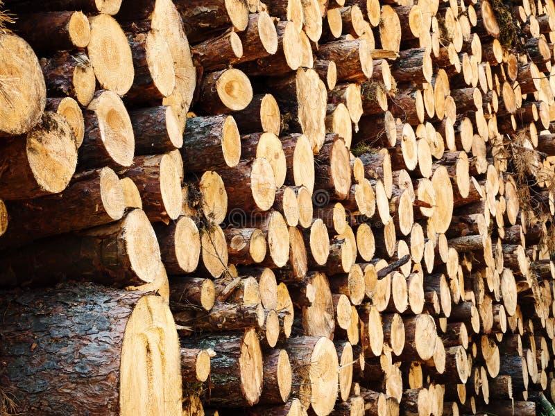 Meldet den Wald an stockfotos