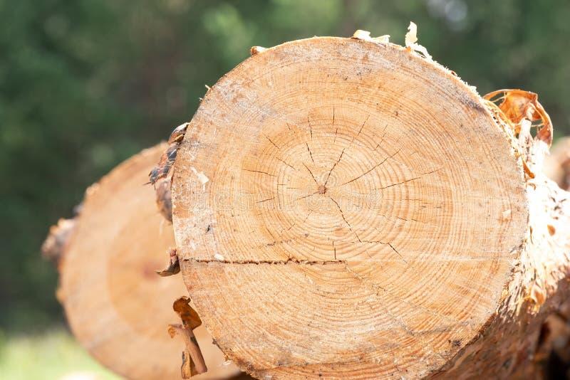 Meldet die Zukunft an, die in den Abstand, der Hintergrundwald zurücktritt stockbild