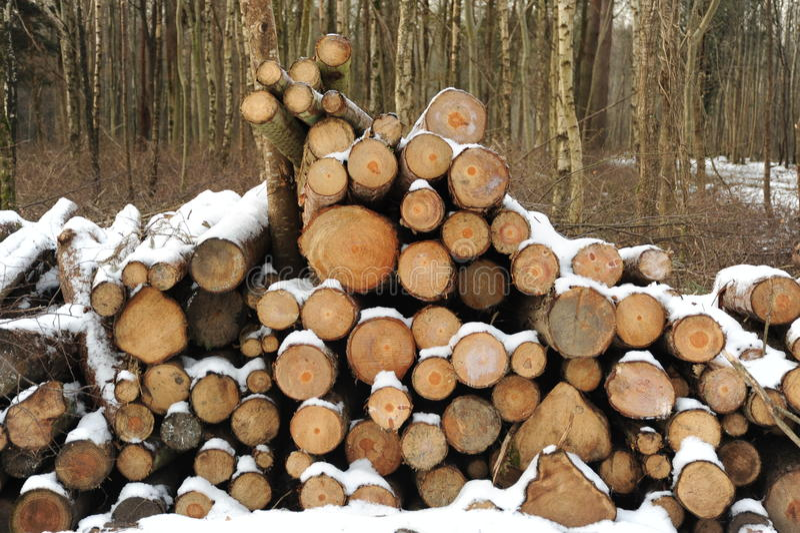 Meldet Winter an lizenzfreie stockbilder