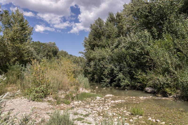 Meldola, Italia, detalle del río de Ronco imagen de archivo