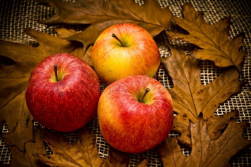 Mele di colore rosso di autunno immagine stock