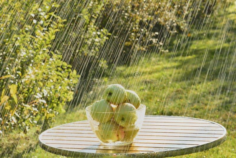 Mele e pioggia verdi di estate fotografia stock
