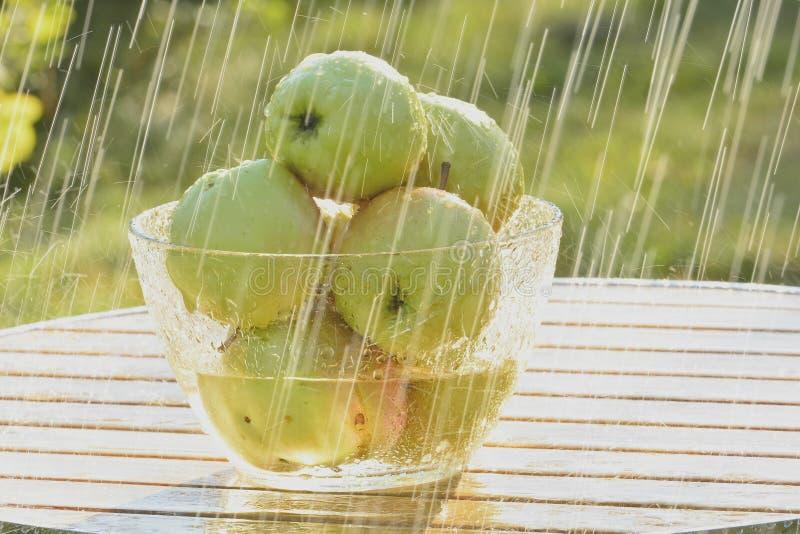 Mele e pioggia verdi di estate fotografia stock libera da diritti