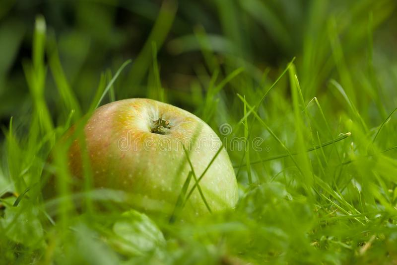 mele eoliche al suolo fotografie stock libere da diritti