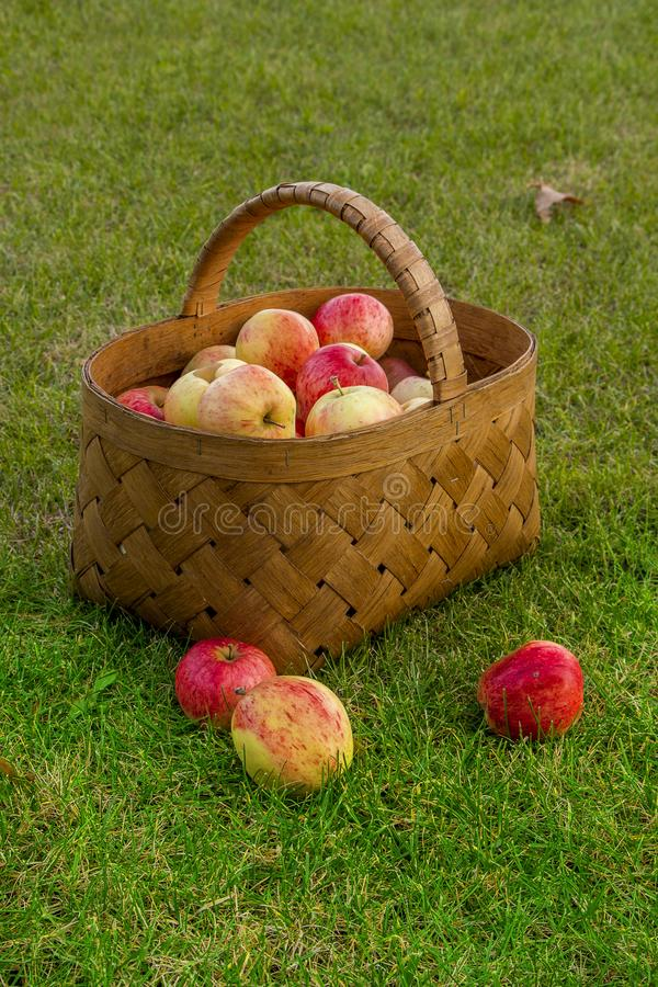 mele nel canestro fotografie stock libere da diritti