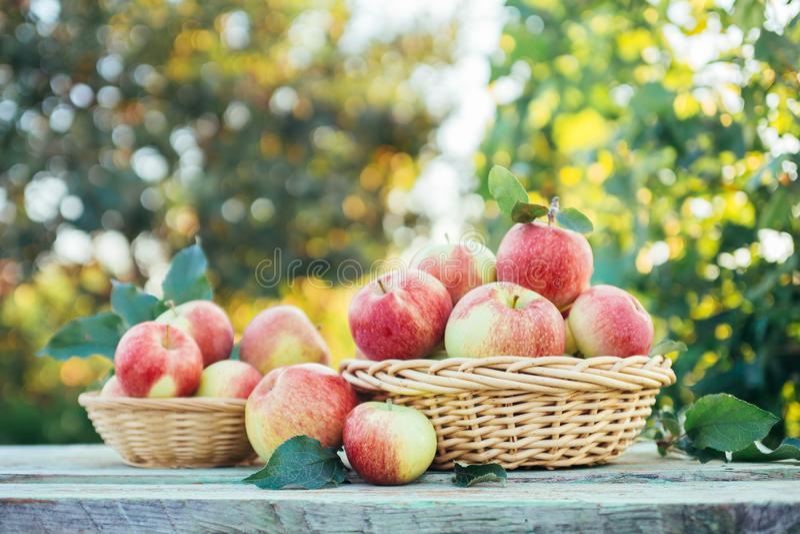 Mele organiche in canestri immagine stock libera da diritti