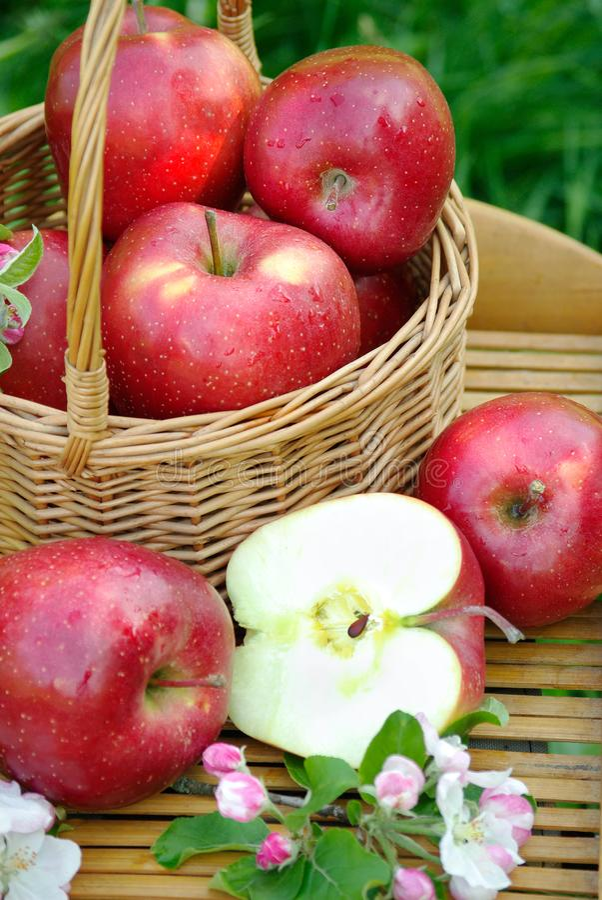 Mele organiche rosse fresche in un canestro di vimini nel giardino Picnic sull'erba Mele e fiori maturi della mela Fine in su fotografia stock libera da diritti