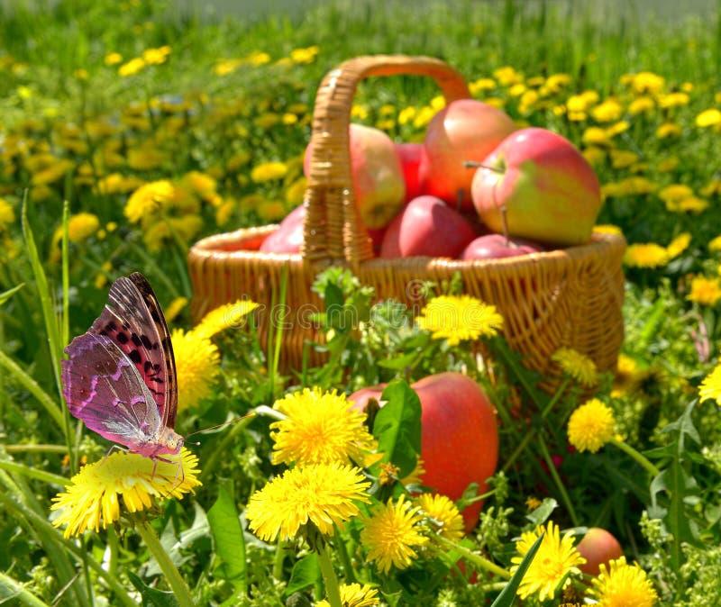 Mele organiche in un canestro all'aperto. immagine stock libera da diritti