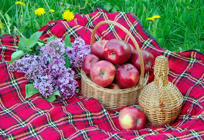 Mele rosse fresche in un canestro di vimini nel giardino Picnic sull'erba Mele mature e una bottiglia di vino Plaid sull'erba, ap immagine stock