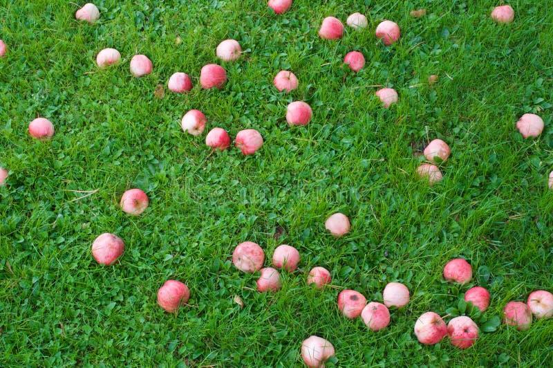 Mele rosse su erba verde immagini stock