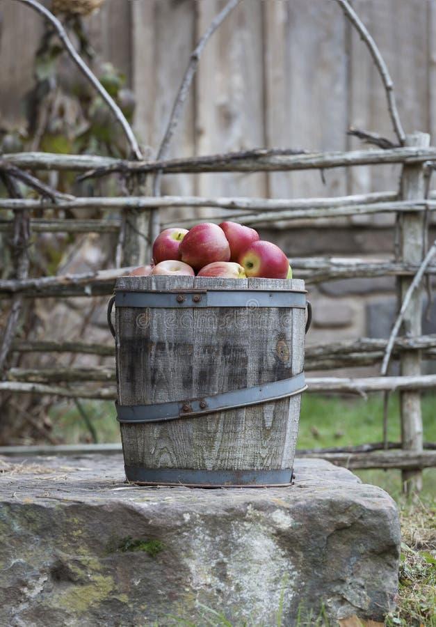 Mele rosse in un barilotto di legno immagine stock