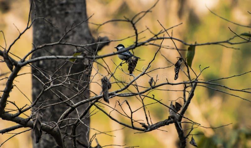 Melharuco de carvão fotografia de stock royalty free