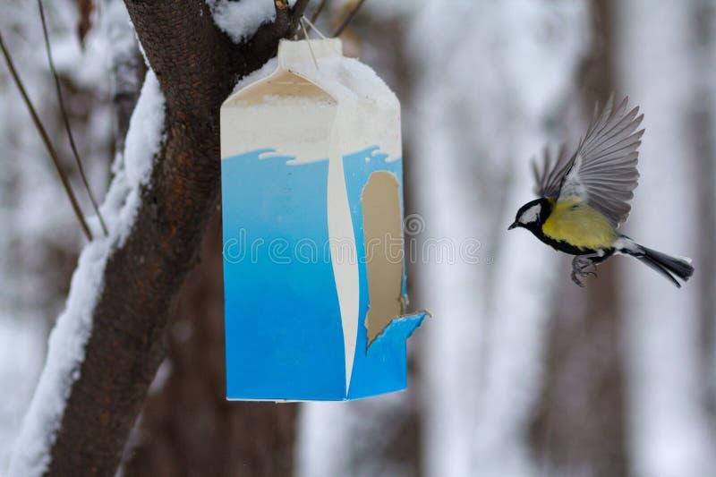 Melharuco nos alimentadores no parque do inverno fotos de stock