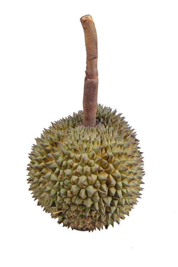 A melhor Tailândia do Durian, Durian de Rpe KanYaw, slalk longo Duria fotografia de stock royalty free