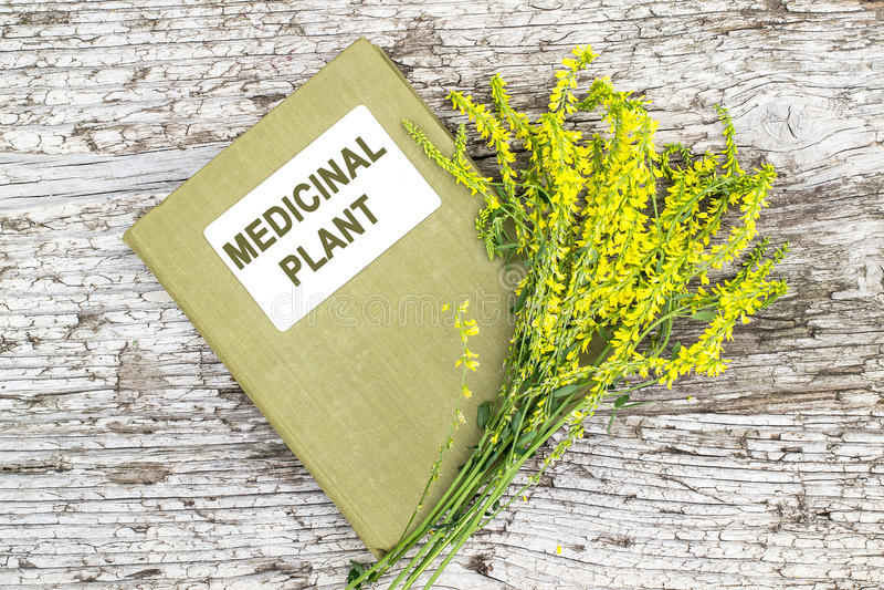 Melilotus officinalis和目录药用植物 库存照片