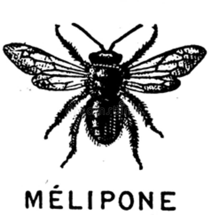 Melipone-oa Free Public Domain Cc0 Image