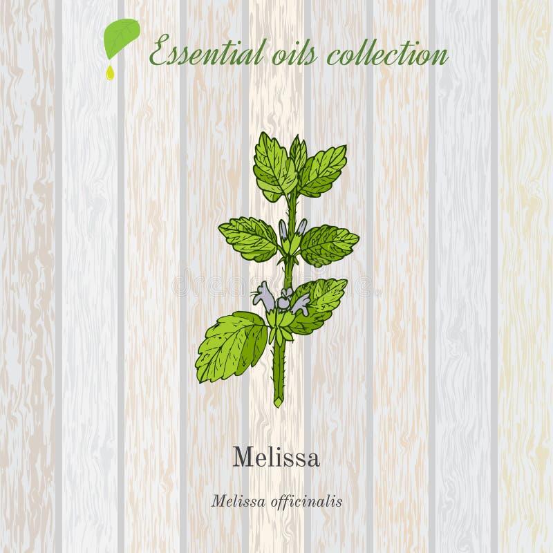 Melissa, essential oil label, aromatic plant. Vector illustration stock illustration