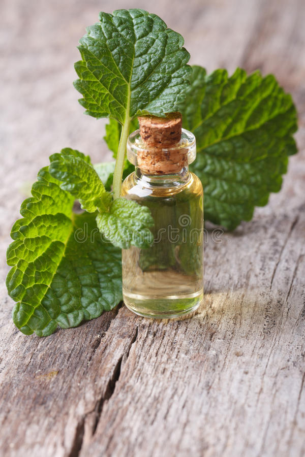 Melissa extract in glass bottle with fresh leaves stock images