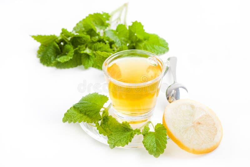 Melissa herbal tea with fresh leaf on white background royalty free stock photos
