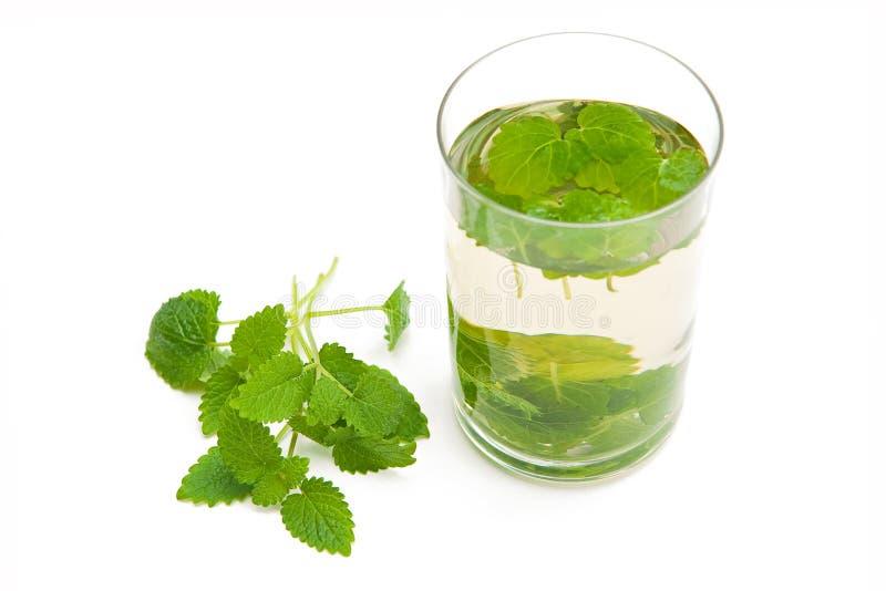 melissa herbata zdjęcie royalty free