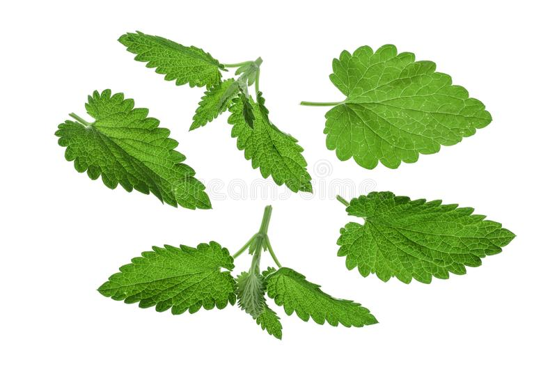Melissa leaf or lemon balm isolated on white background. Top view. Flat lay pattern royalty free stock photo