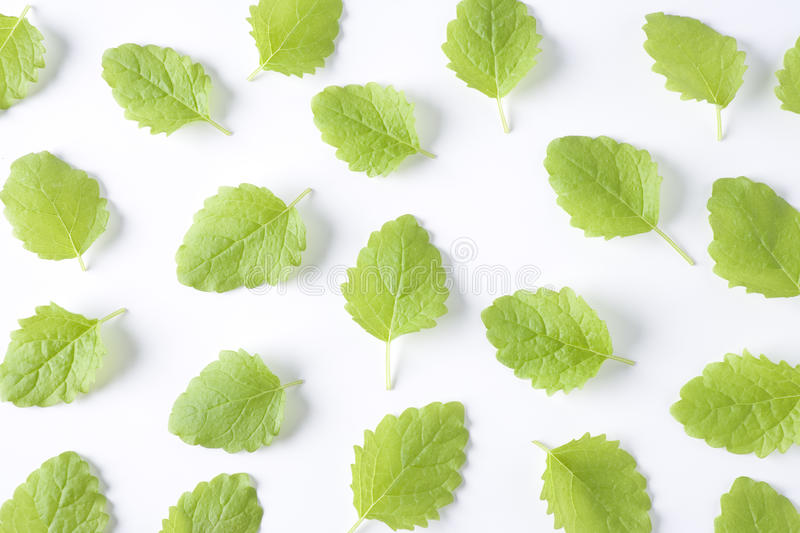 Download Melissa Officinalis Leaves Stock Photography - Image: 11272842
