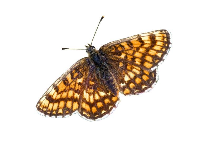 Melitaea athalia stock image