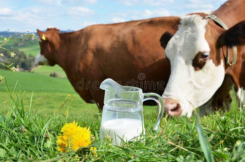 Melk en koeien stock fotografie