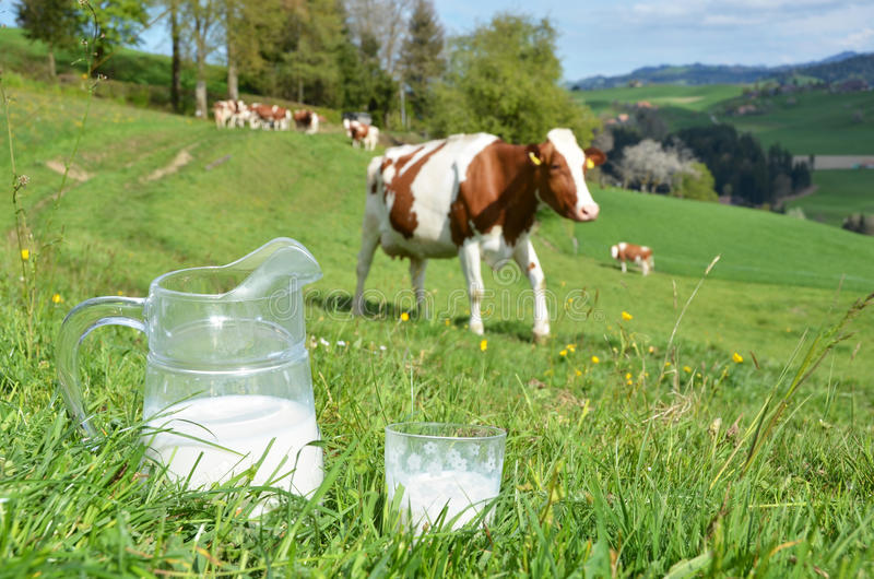 Melk en koeien stock foto