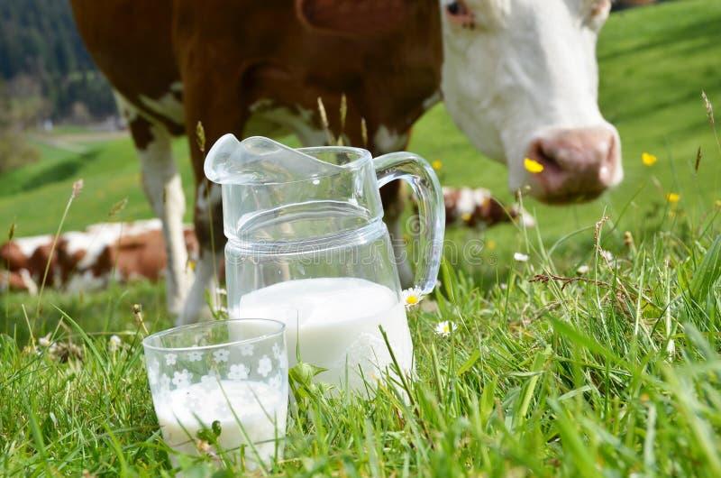 Melk en koeien stock foto's
