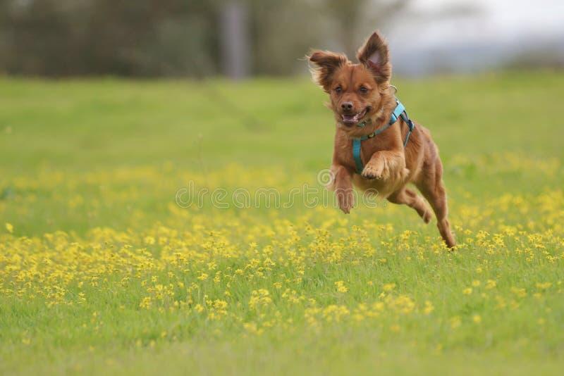 Melkachtig de hond royalty-vrije stock afbeelding