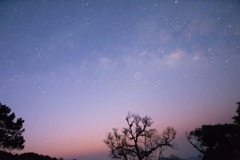 melkachtige manier en ster met boomsilhouet stock afbeeldingen