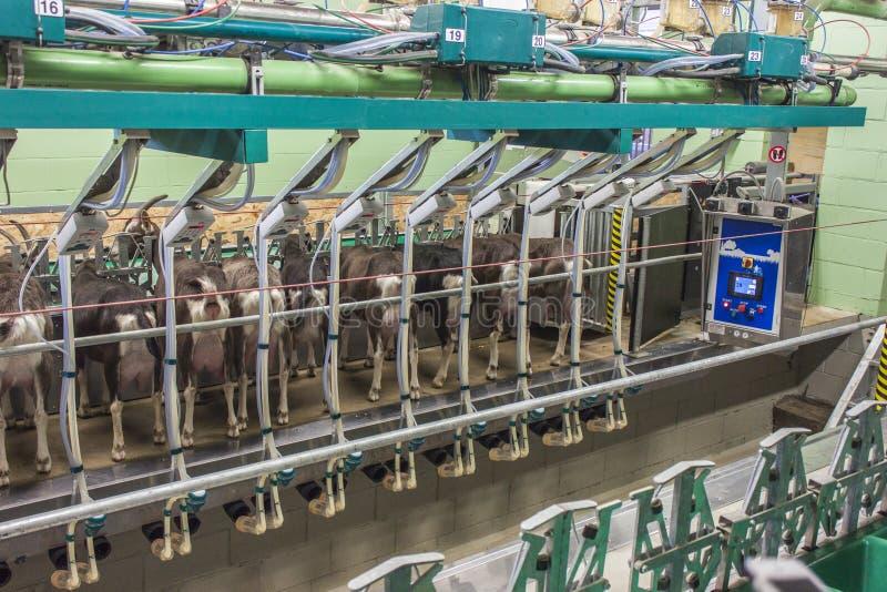Melkende robot in goatfarm royalty-vrije stock foto